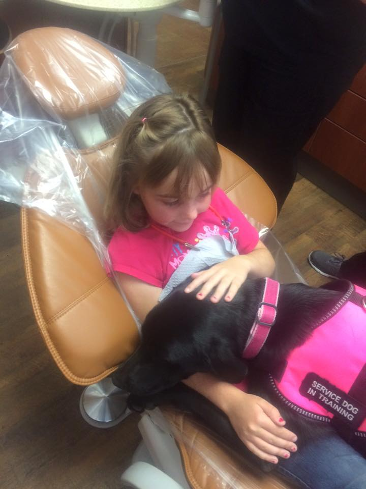 Stella Therapy Dog Registered Service Dog